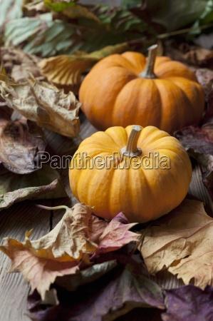 two organic mini pumpkins on autumnal