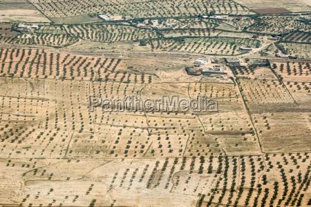 olive plantation in tunisia