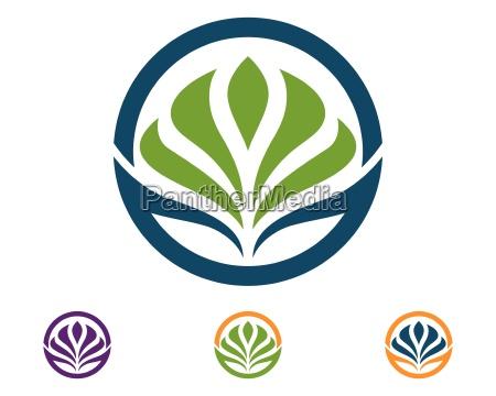 beauty vector lotus flowers design logo