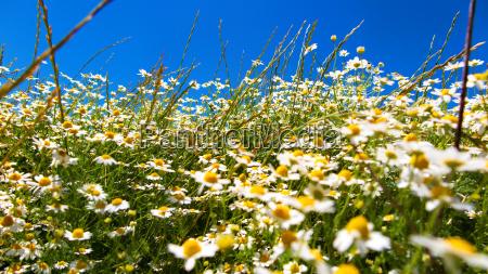 prado da flor em um dia