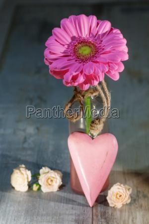 gerbera flower with a pink heart
