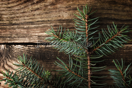 christmas fir tree on the wooden