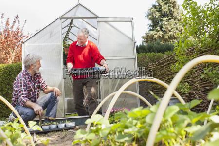 senior male friends in vegetable garden