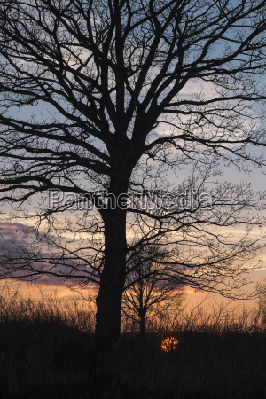 silhouette of tree at sunset schleswig