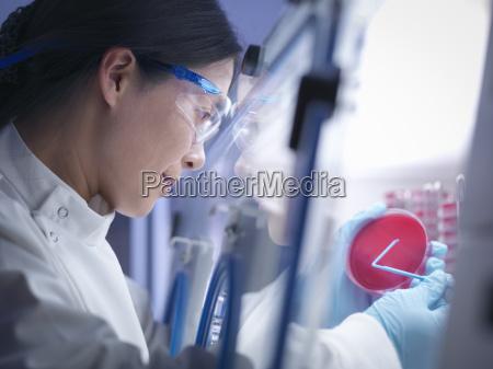kvinde makrooptagelse naerbillede kvindelig videnskab forskning