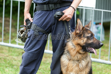 police dog policeman with a german