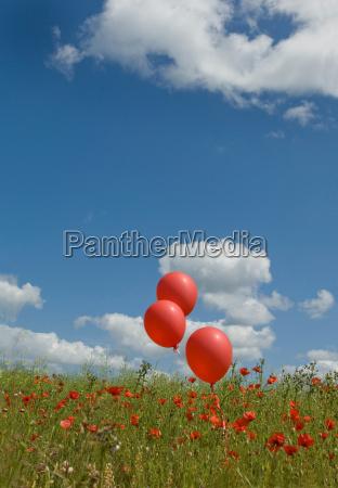red balloons in poppy field