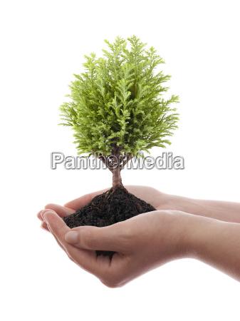 growing green tree in hands isolated