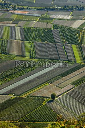 aerial view of crop fields