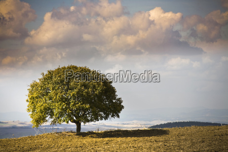 view of tree and landscape volterra