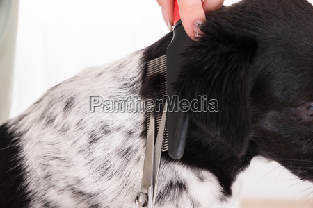 close up of woman cutting hair