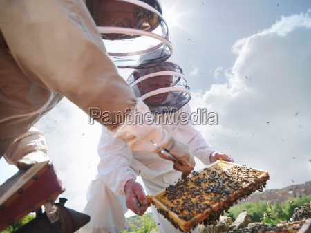 beekeepers search for queen bee