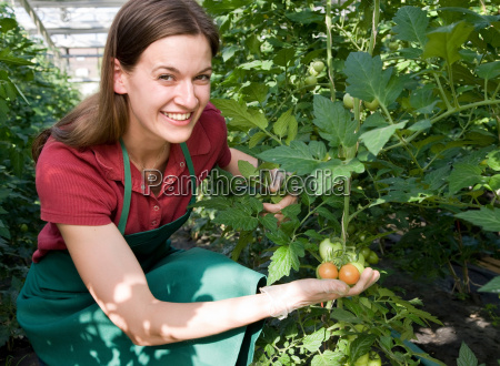 woman caring for tomato plant