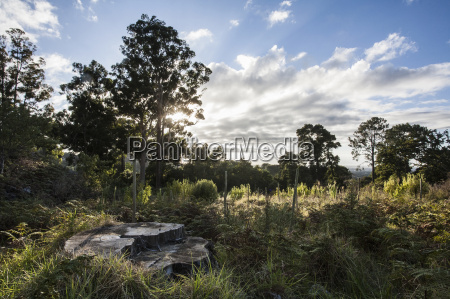 tree stump in overgrown clearing of
