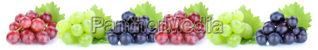grapes grape fruits fruit fruits isolated