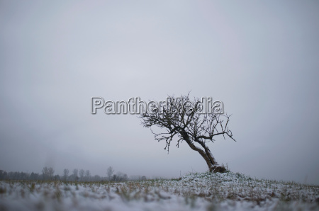 bare tree growing in snowy landscape
