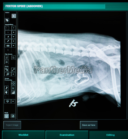 xray image of dog with plastic
