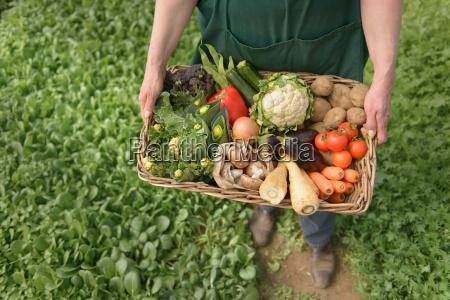 farmer carrying organic vegetables in box