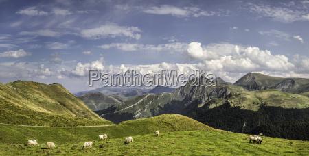 sheep grazing saint michel pyrenees france