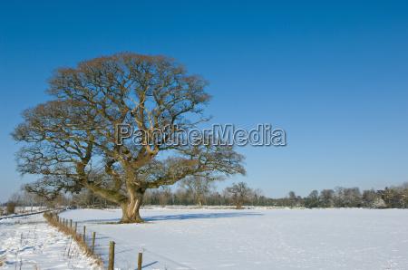 tree growing in snowy rural field