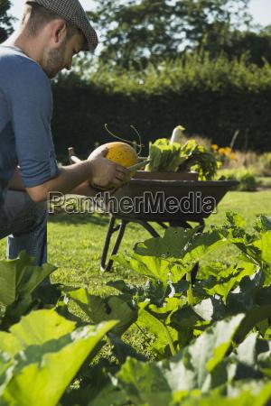 gardener checking vegetable