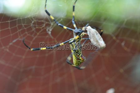primo piano di ragno e catturato