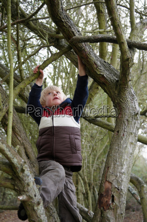 boy climbing on tree branches
