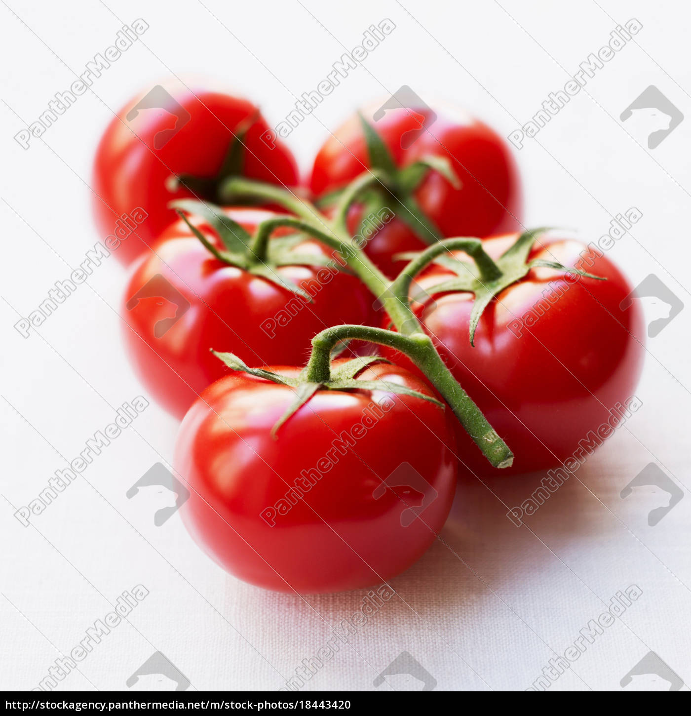 tomatoes, on, branch - 18443420