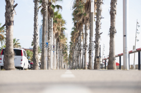 avenue of palm trees and pavement