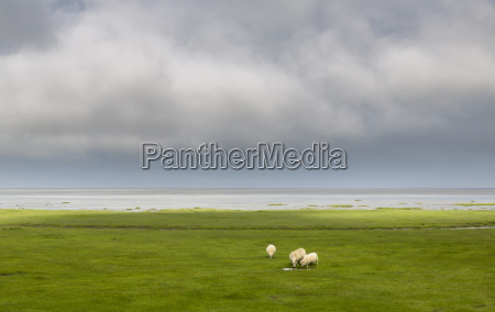view of sheep grazing in seafront