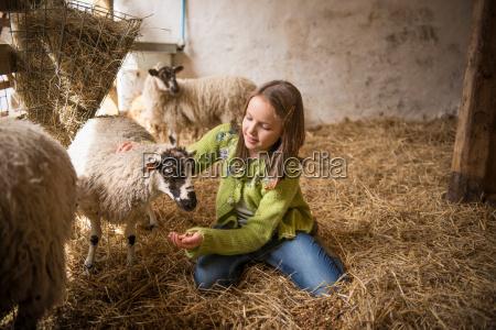 portrait of girl feeding sheep on
