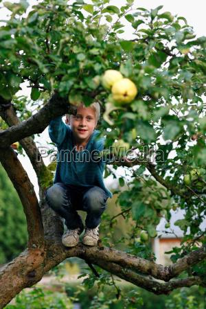 boy climbing fruit tree