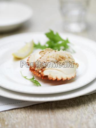 dressed orkney crab mini gratins