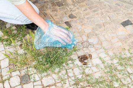 female picking up dog feces