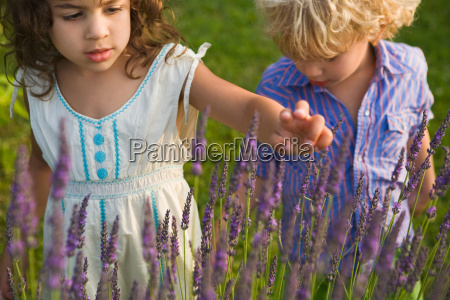 boy and girl looking at lavender