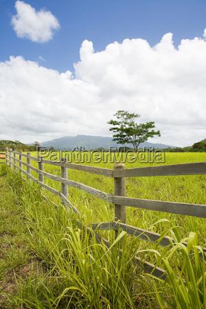 field in kauai hawaii