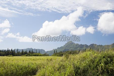 mountain scene in kauai