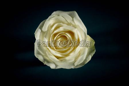 close up of flower petals