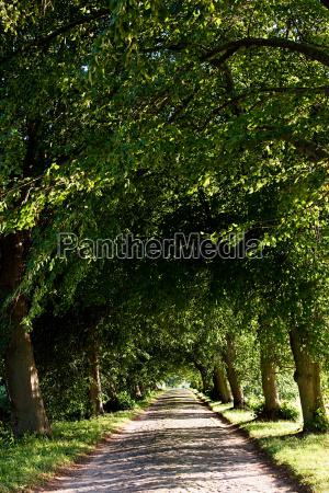 treelined avenue rugen germany