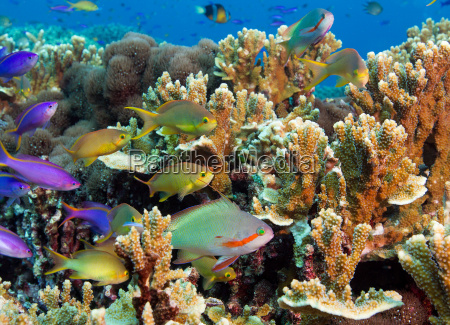 colorful reef scene