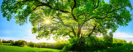 the sun shines through large majestic