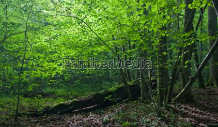sun entering rich deciduous forest