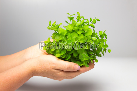 the female hand holding new green