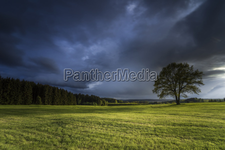 tree in front of dark clouds