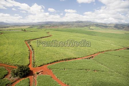 coffee farm in kauai hawaii