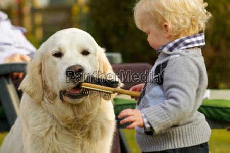 little boy letting golden retriever chew