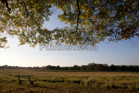 bench in a peaceful grassland