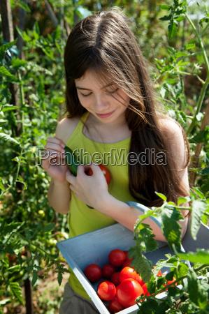 girl holding basket of tomatoes