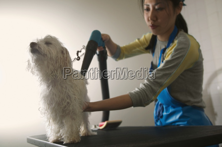 woman drying dogs fur