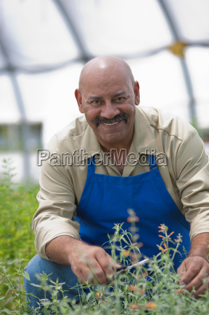 mature man looking after plants in